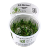 1-2-Grow Littorella uniflora InVitro